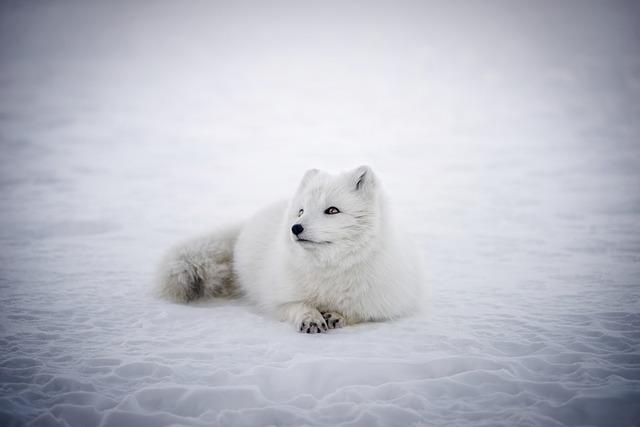 Faire un voyage photo en islande en hiver