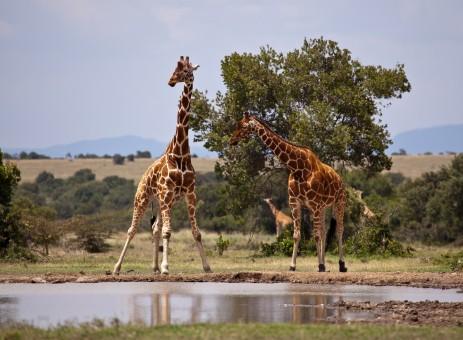 S'évader au cœur de la savane le temps d'un voyage au Kenya