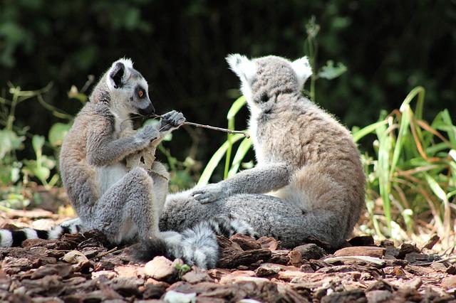 Escapade à Madagascar : 4 idées d'activités pour un séjour d'exception