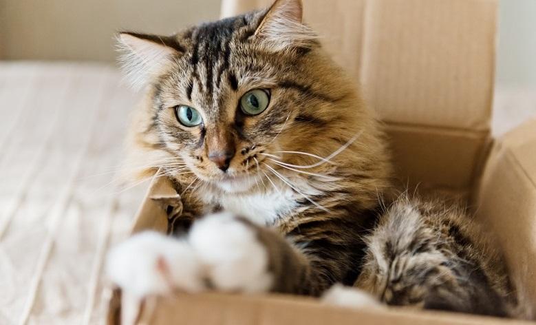 Comment préparer votre animal de compagnie au déménagement ?