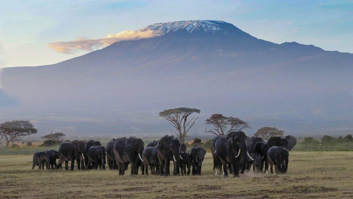 Aventure nature au Kenya : top 3 des plus beaux parcs à visiter