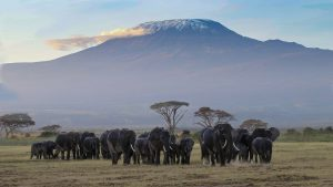 nature au Kenya